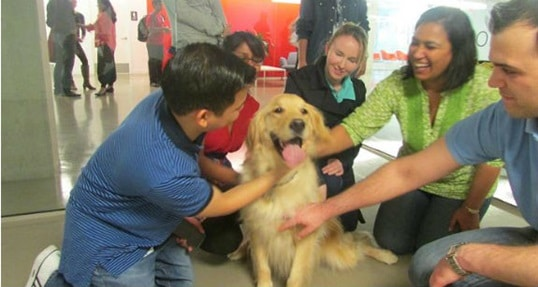 Dog days at Hult: Therapy pups help ease the stress of finals