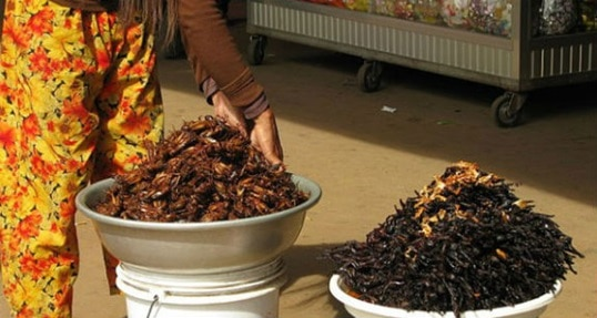 Insects for food – Solve the global food crisis, win $1 million [CNNMoney]