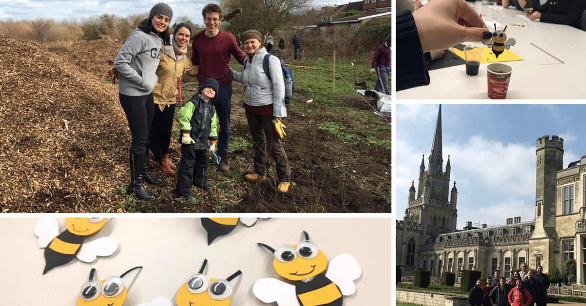 All about the birds and the bees: London MBA students do their part for the environment