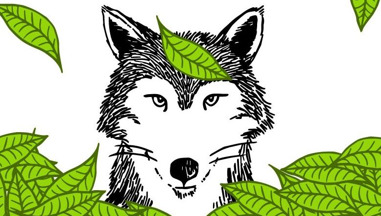 Hungry like the wolf: Introducing Asha