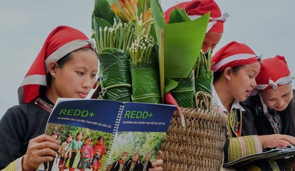 UN-REDD Programme in action